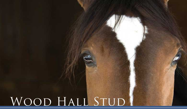 About Wood Hall Stud
