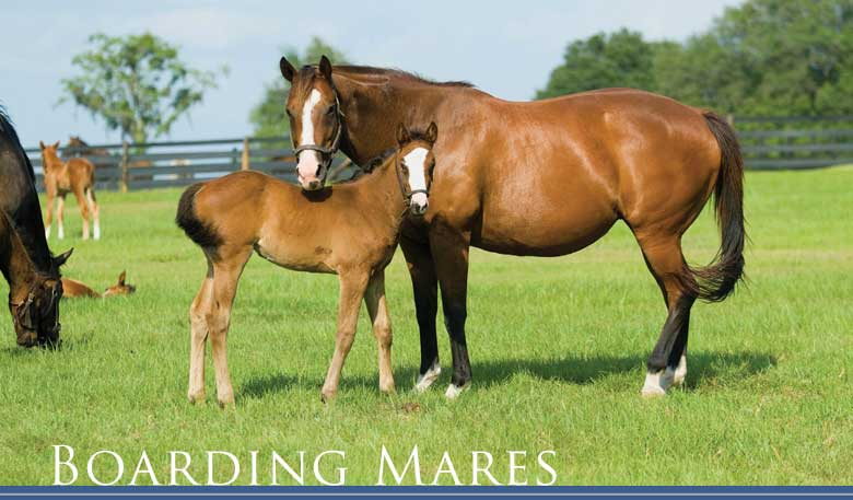 Wood Hall Stud - Boarding Mares